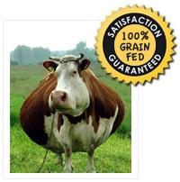 Grain Fed Cow